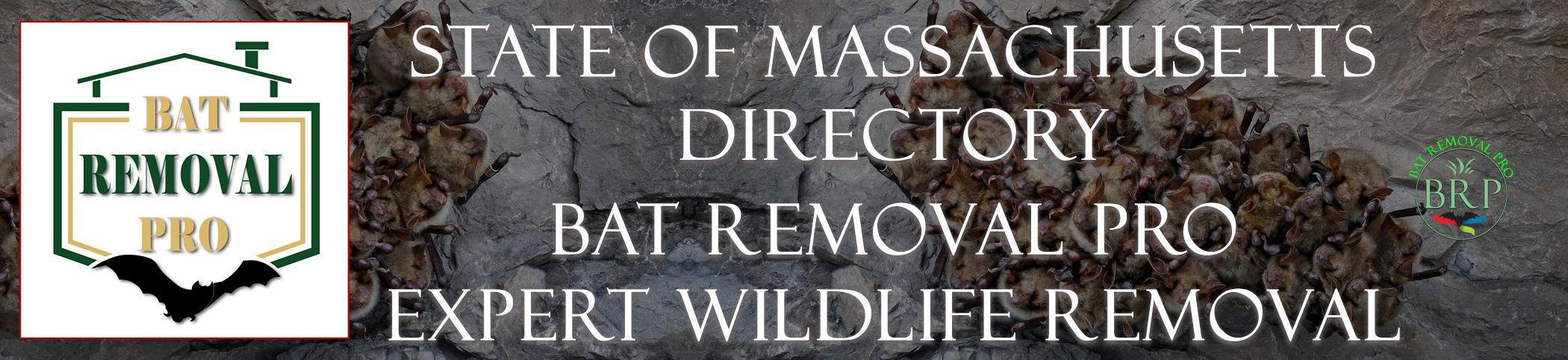 MASSACHUSETTS-bat-removal-at-bat-removal-pro-header-image