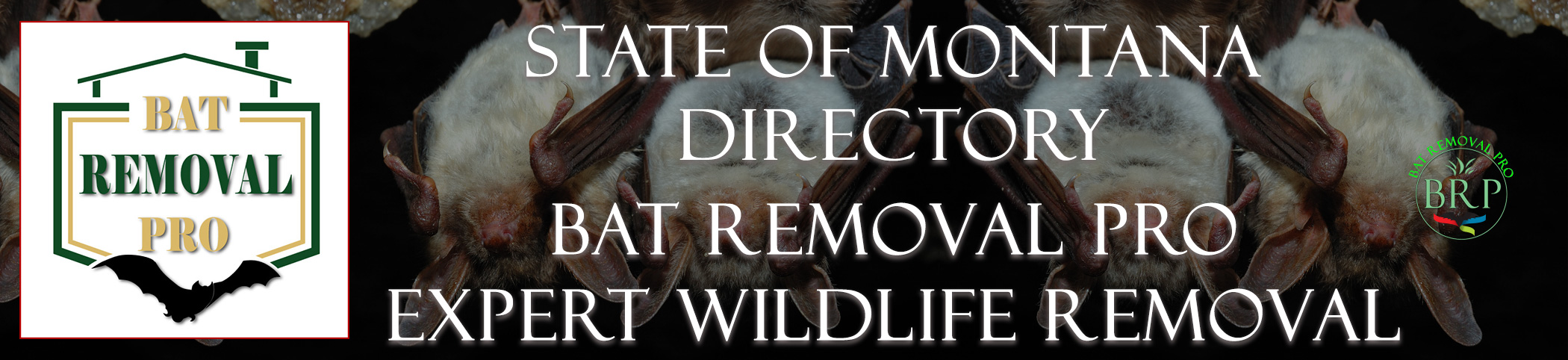 MONTANA-bat-removal-at-bat-removal-pro-header-image
