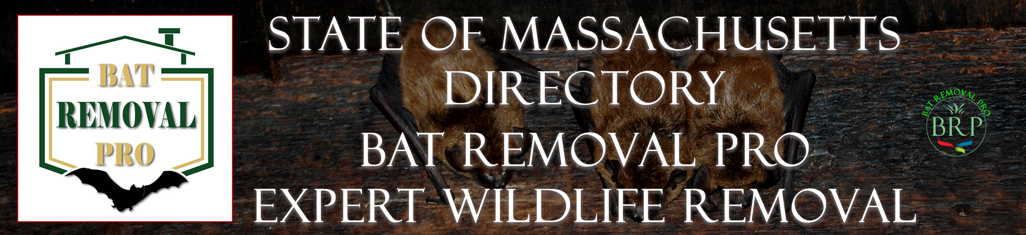 Massachusetts header image at bat removal pro