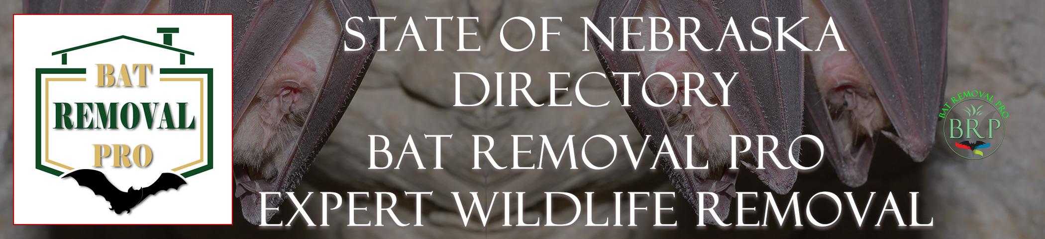 NEBRASKA-bat-removal-at-bat-removal-pro-header-image