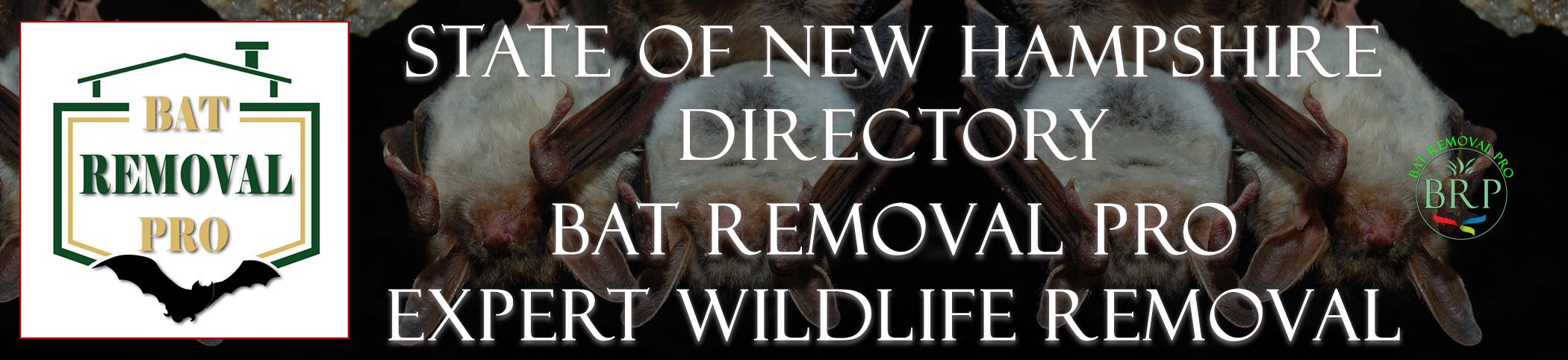 NEW-HAMPSHIRE-bat-removal-at-bat-removal-pro-header-image