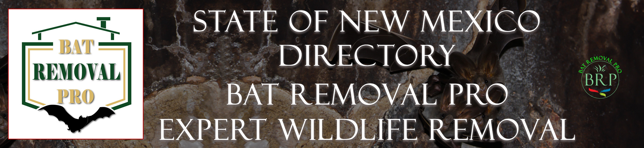 NEW-MEXICO-bat-removal-at-bat-removal-pro-header-image