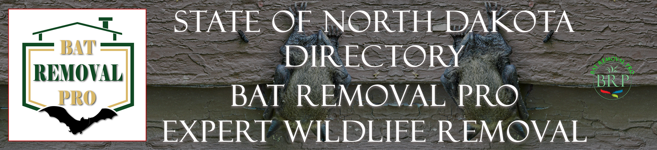 NORTH-DAKOTA-bat-removal-at-bat-removal-pro-header-image