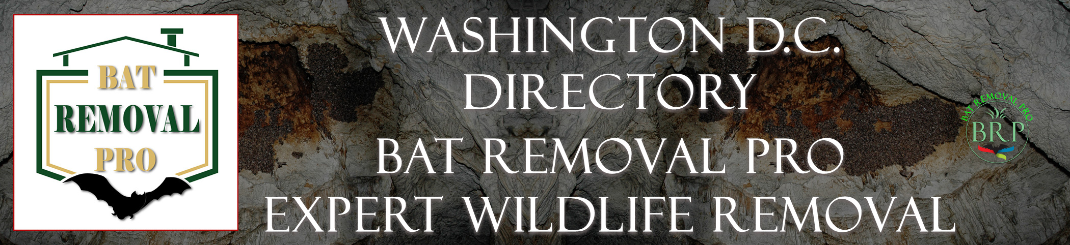 WASHINGTON-DC--bat-removal-at-bat-removal-pro-header-image