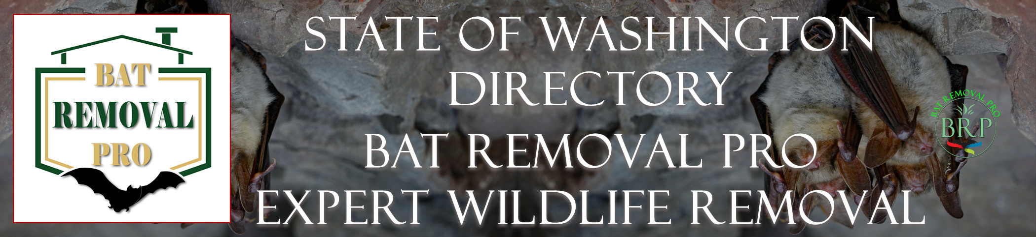 WASHINGTON-bat-removal-at-bat-removal-pro-header-image