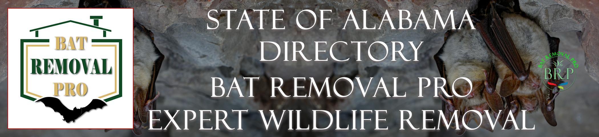alabama-bat-removal-at-bat-removal-pro-header-image