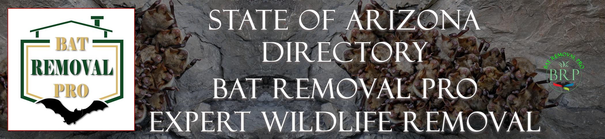 arizona-bat-removal-at-bat-removal-pro-header-image