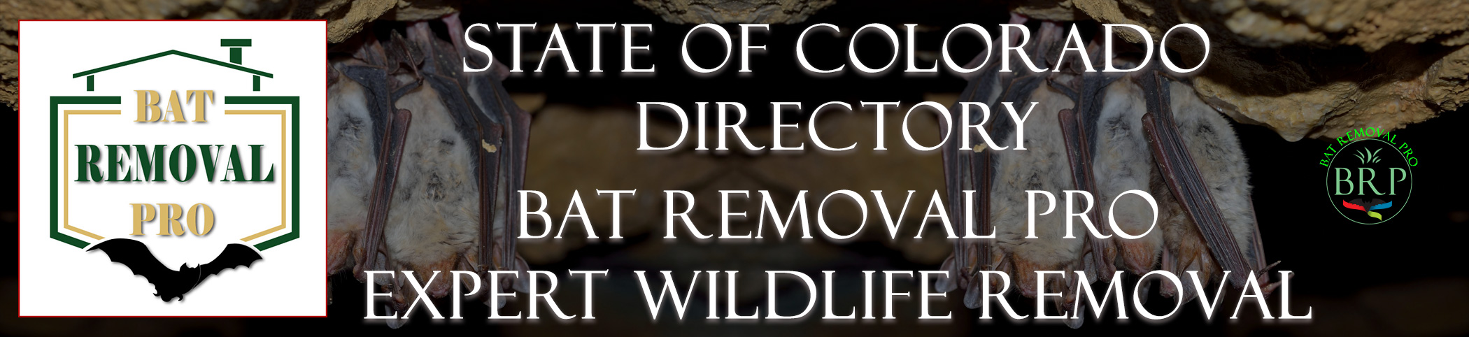 Colorado Header Image At Bat Removal Pro National Directory of Control, Trapping and Removal Professionals