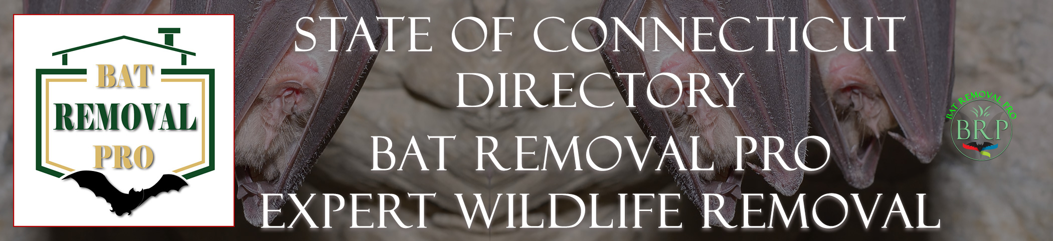 Connecticut Header Image At Bat Removal Pro National Directory of Control, Trapping and Removal Professionals