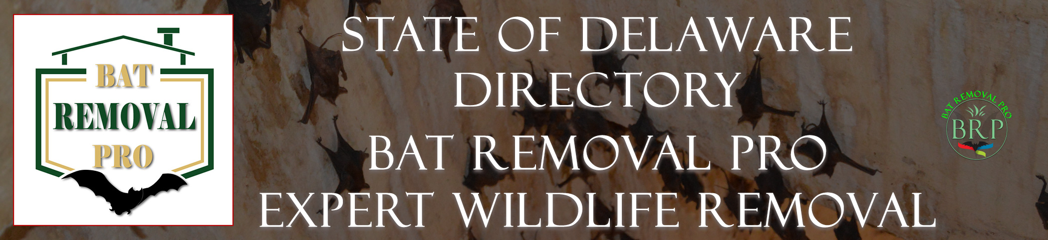 delaware-bat-removal-at-bat-removal-pro-header-image