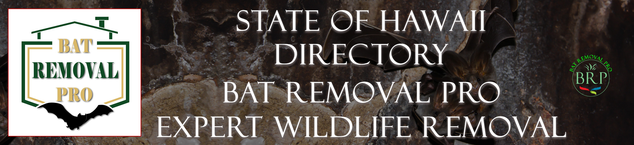 hawaii-bat-removal-at-bat-removal-pro