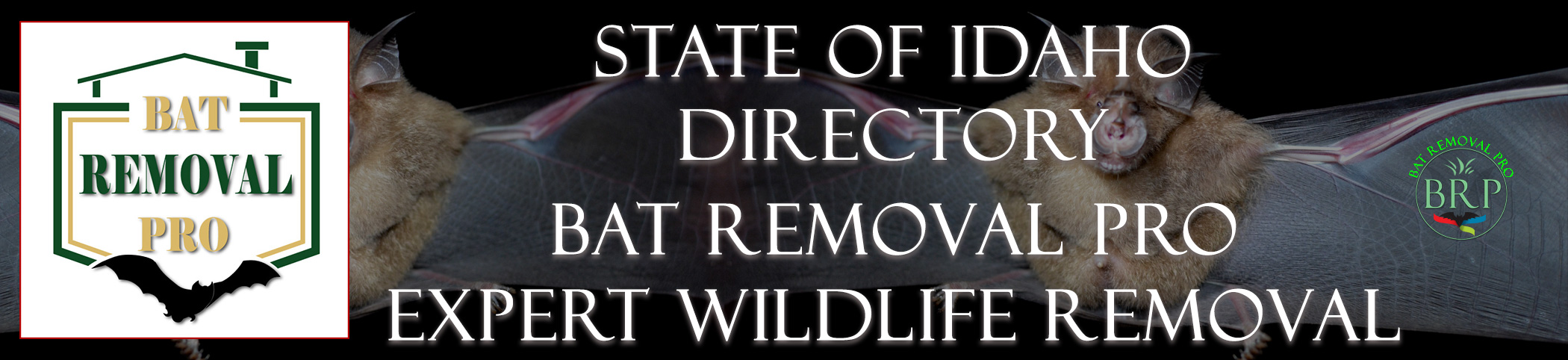 idaho-bat-removal-at-bat-removal-pro-header-image