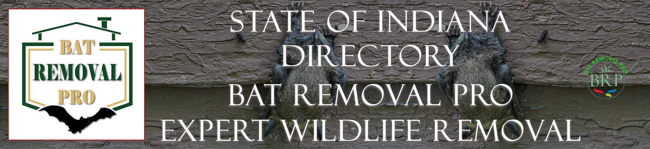 indiana-bat-removal-at-bat-removal-pro-header-image