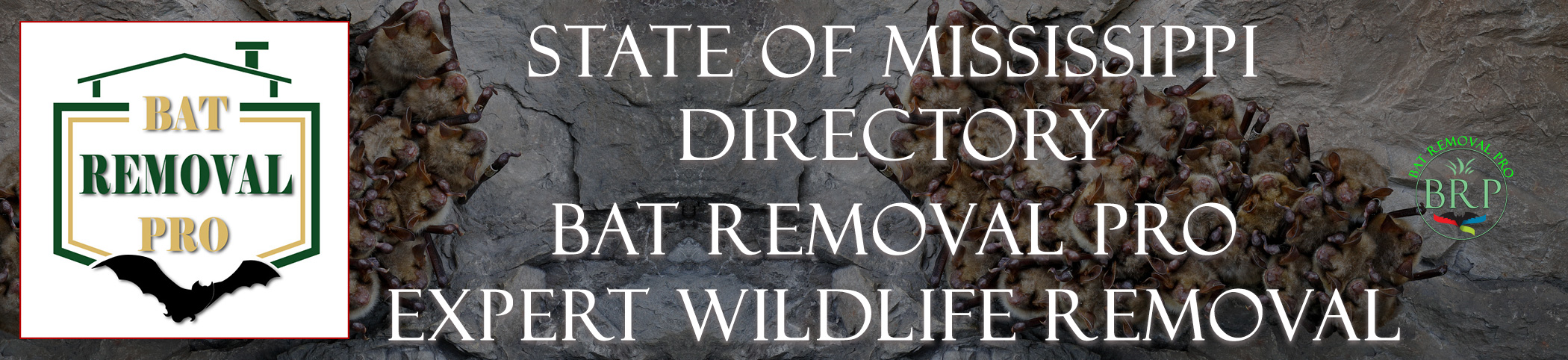 mississippi-bat-removal-at-bat-removal-pro-header-image