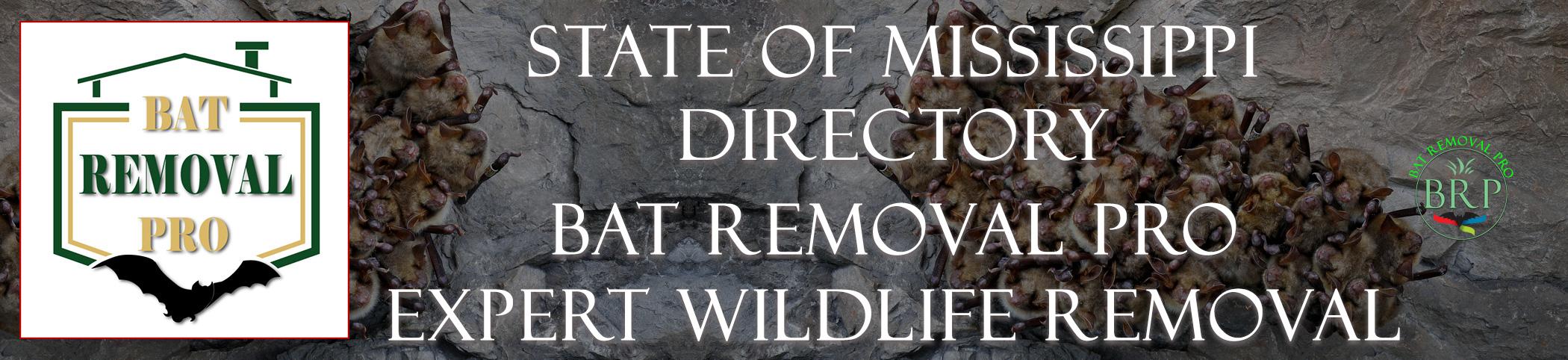 mississippi-bat-removal-at-bat-removal-pro-header-image