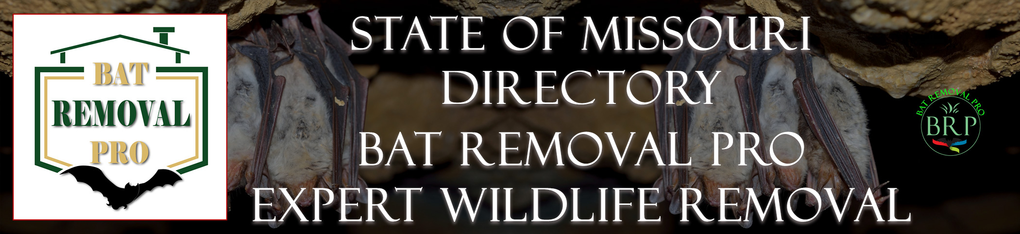 missouri-bat-removal-at-bat-removal-pro-header-image