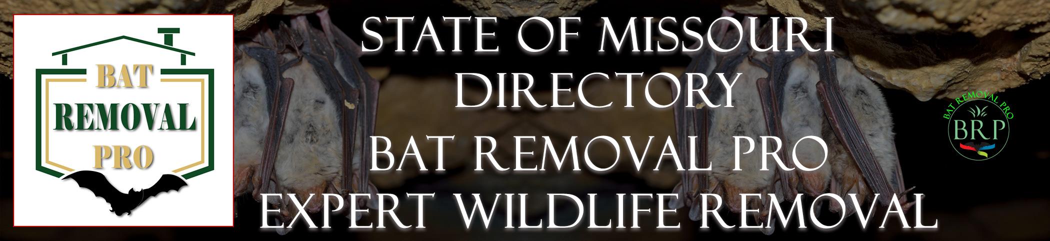 missouri-bat-removal-at-bat-removal-pro-header-image