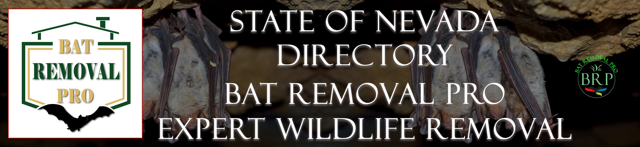 nevada-bat-removal-at-bat-removal-pro-header-image