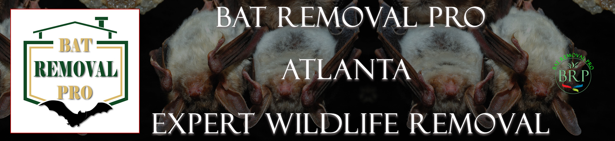 Atlanta-bat-removal-at-bat-removal-pro-header-image
