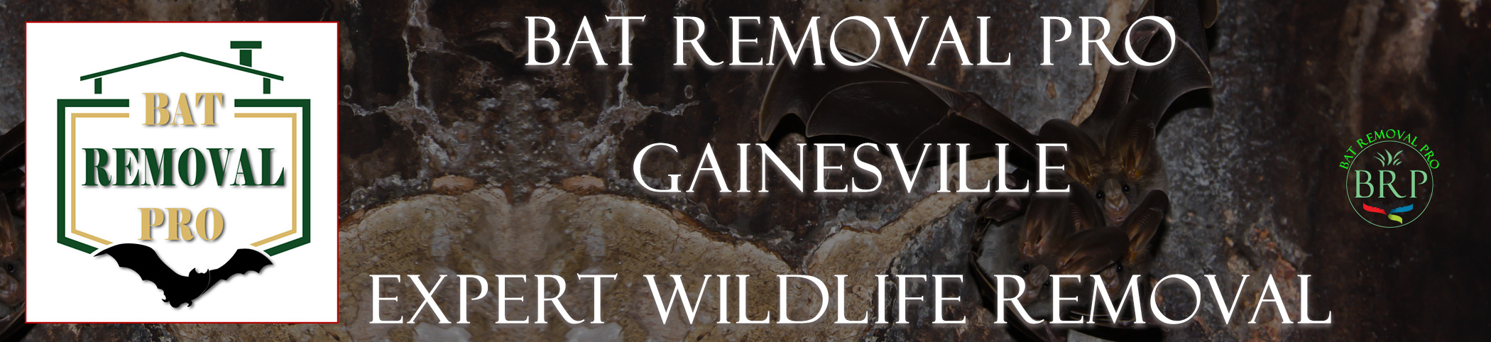 Gainesville-bat-removal-at-bat-removal-pro-header-image