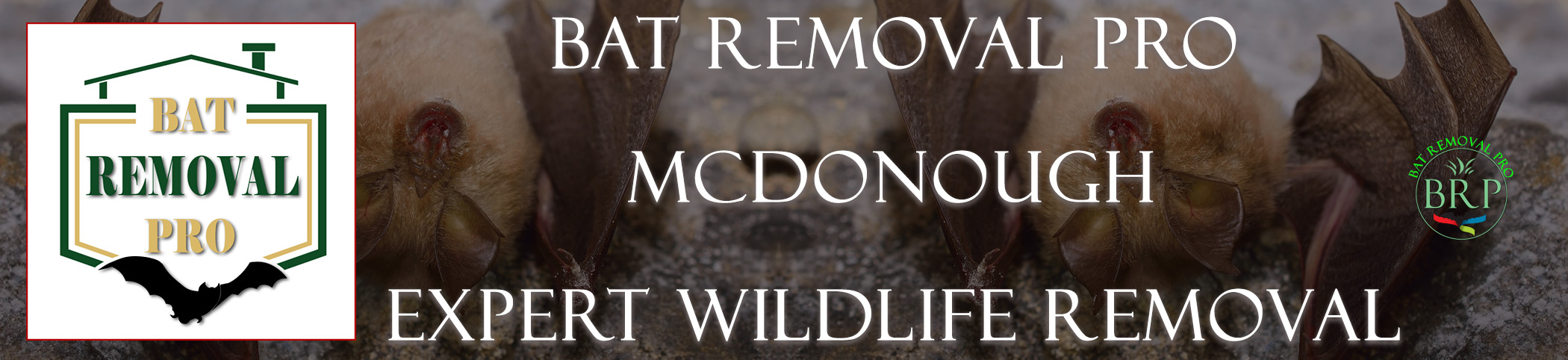 McDonough-bat-removal-at-bat-removal-pro-header-image