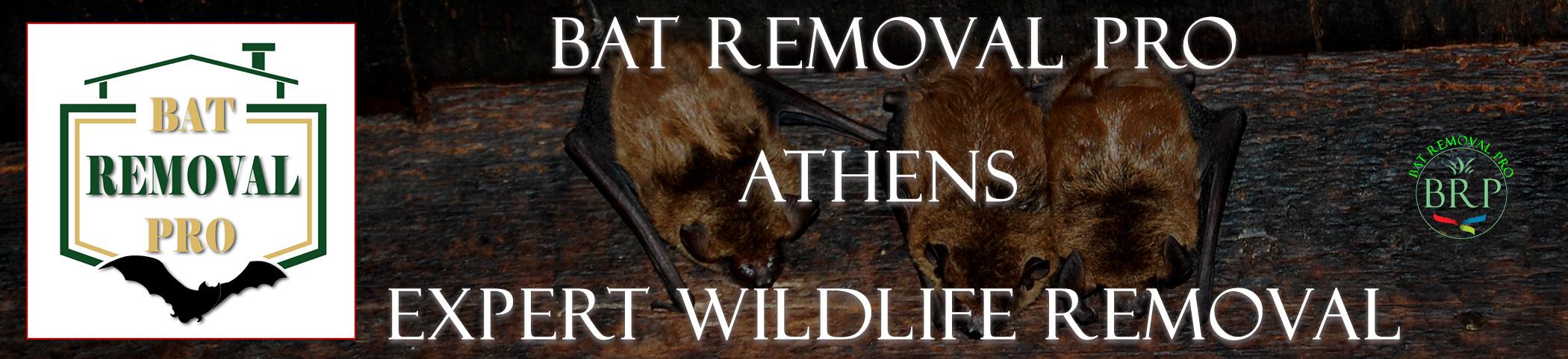athens-bat-removal-at-bat-removal-pro-header-image