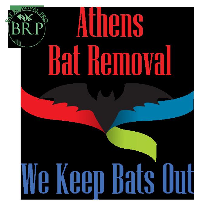 athens_georgia image at bat removal pro