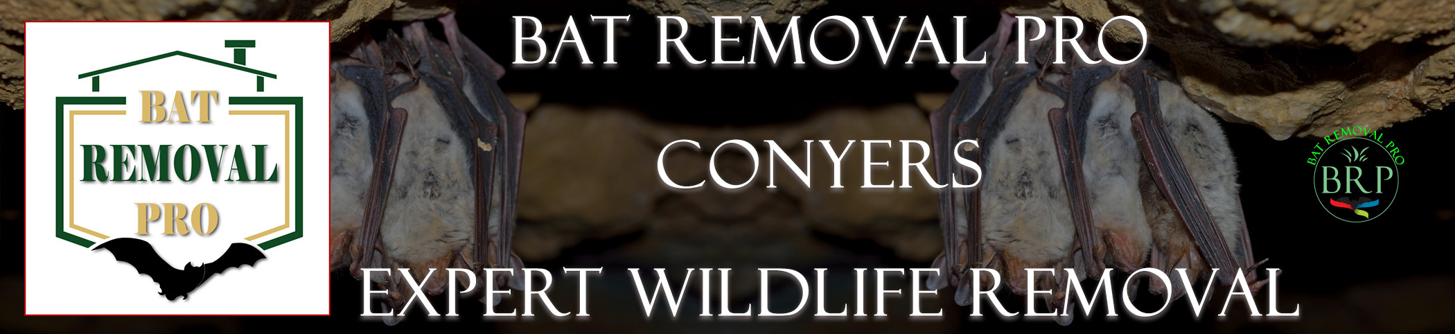 Conyers-bat-removal-at-bat-removal-pro-header-image