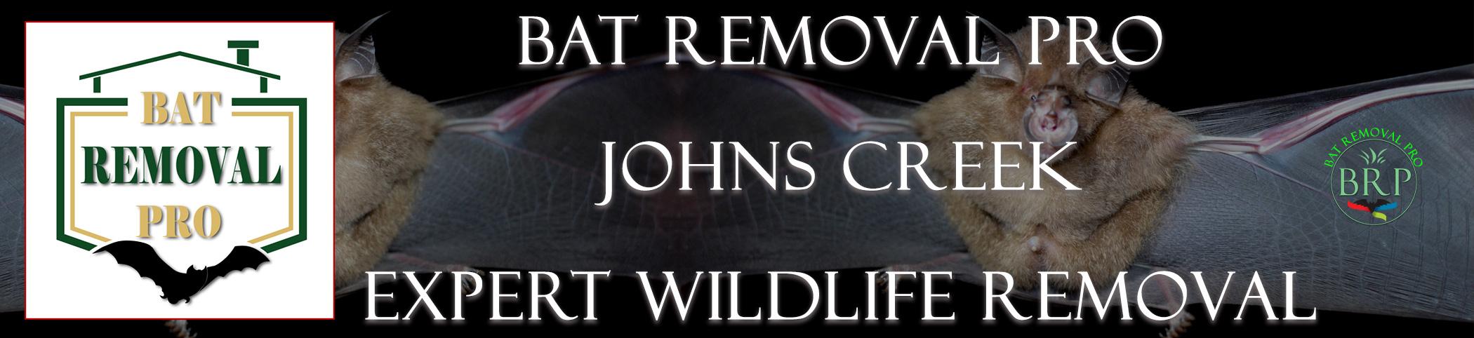 Johns-Creek-bat-removal-at-bat-removal-pro-header-image