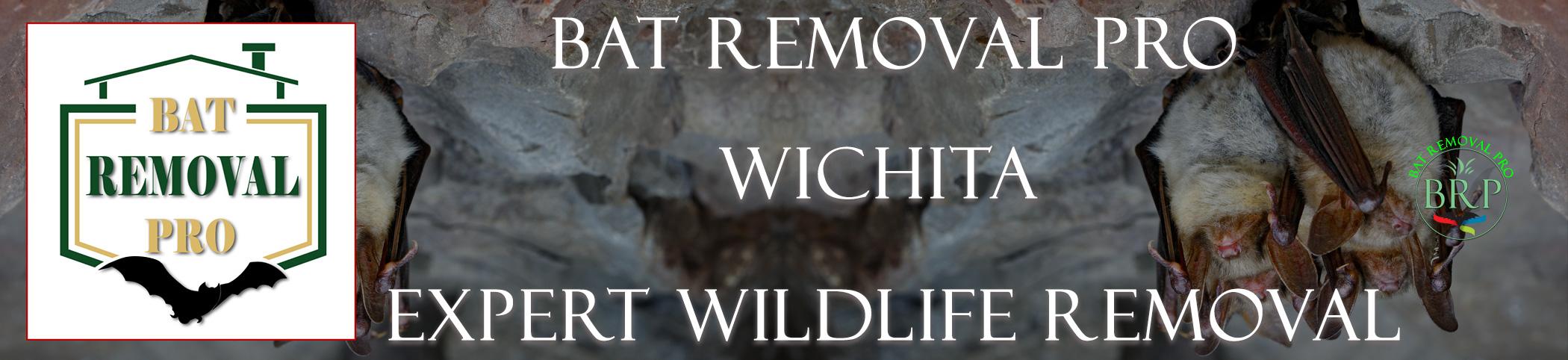 wichita-bat-removal-at-bat-removal-pro-header-image