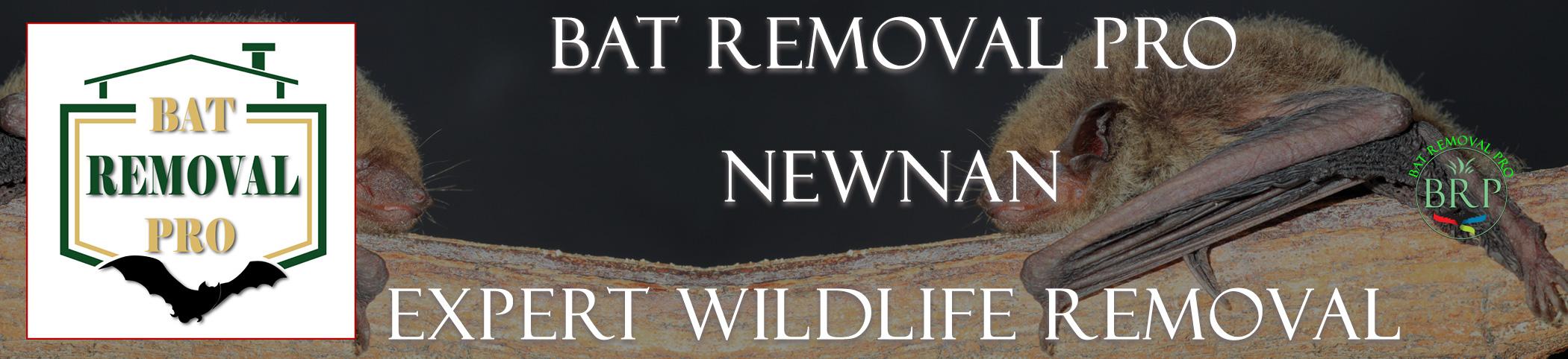 Newnan-bat-removal-at-bat-removal-pro-header-image