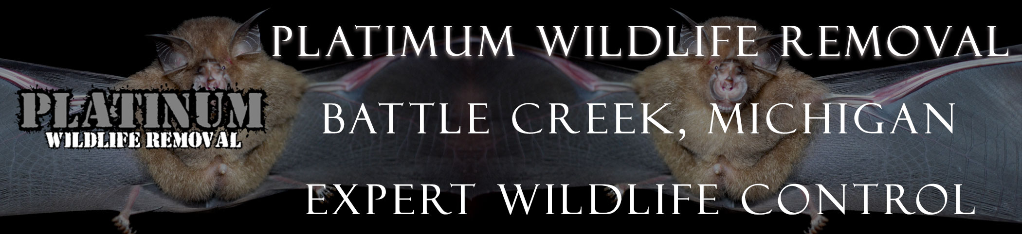 Battle Creek Michigan Bat Removal Header Image - Rent our bat removal page