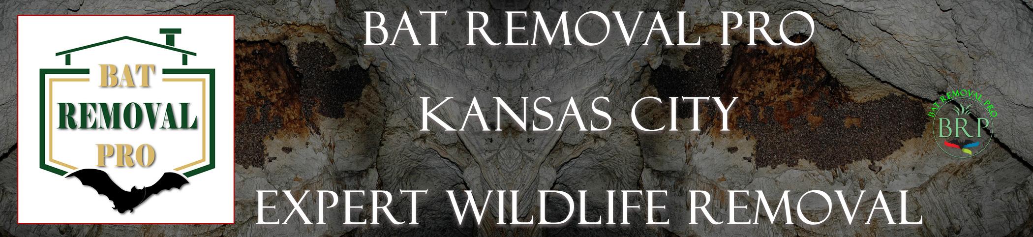 Kansas City Kansas Header Image at bat removal pro