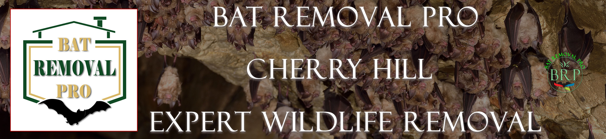 CHERRY-HILL-bat-removal-at-bat-removal-pro-header-image