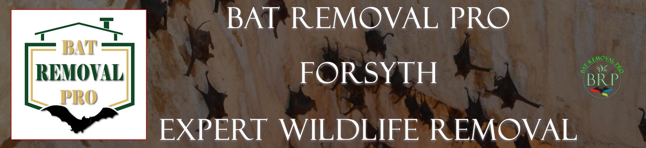 forsyth-bat-removal-at-bat-removal-pro-header-image