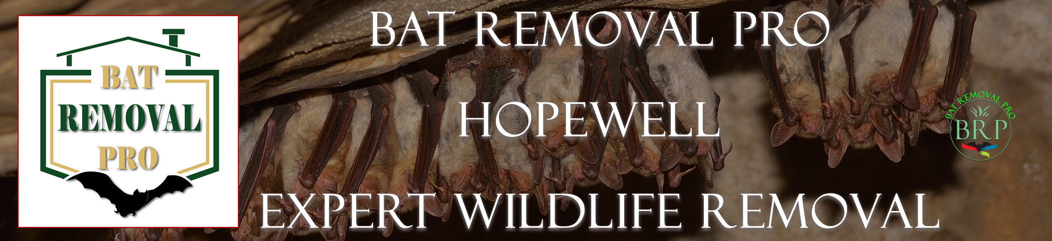 HOPEWELL-bat-removal-at-bat-removal-pro-header-image