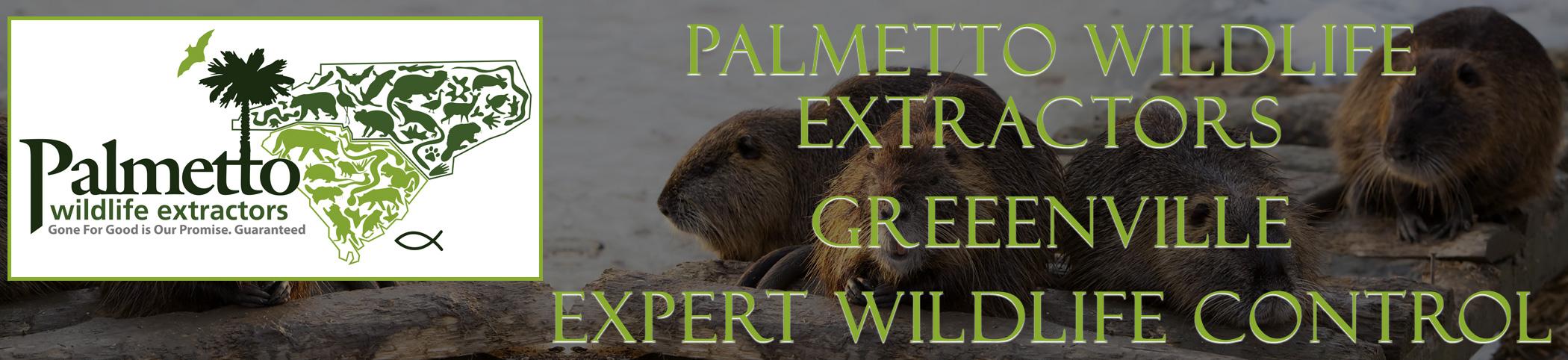 Palmetto Wildlife Extractors greenville south carolina header image