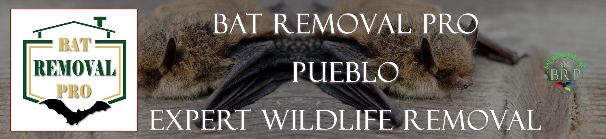 pueblo_colorado header image at bat removal pro