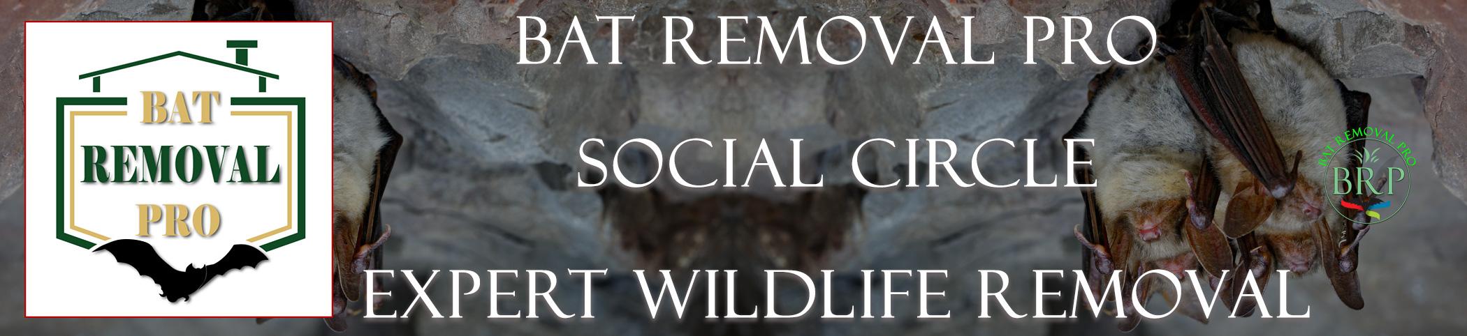 SOCIAL-CIRCLE-georgia-bat-removal-at-bat-removal-pro