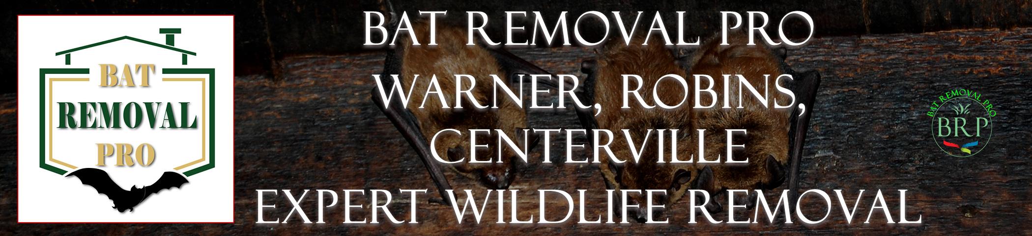 Warner-Robins-Centerville-bat-removal-at-bat-removal-pro-header-image