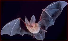 bat removal A & D Construction Plus