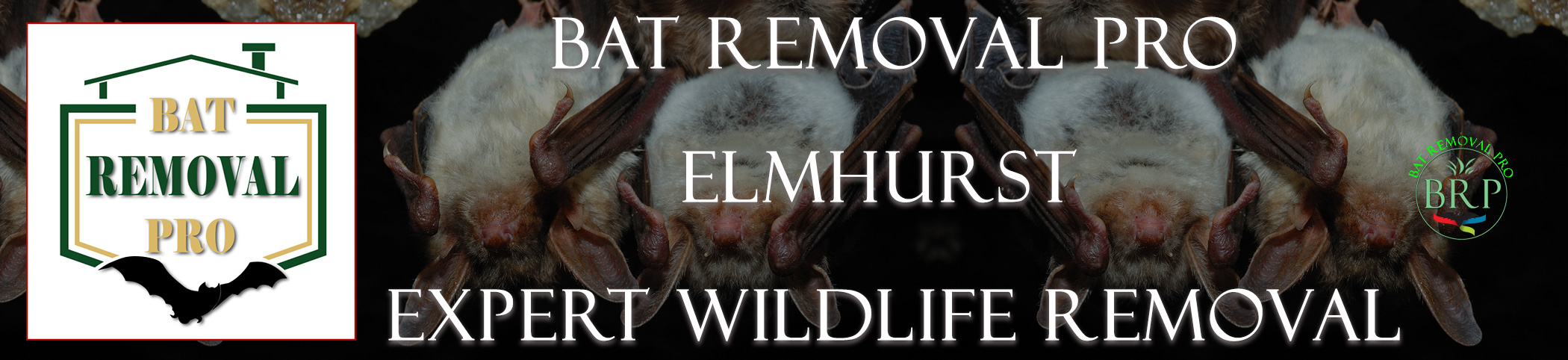 elmhurst-bat-removal-at-bat-removal-pro-header-image