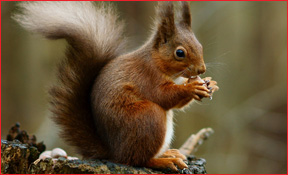 Above & Beyond Wildlife Control's Spring Hill Florida Squirrel Removal
