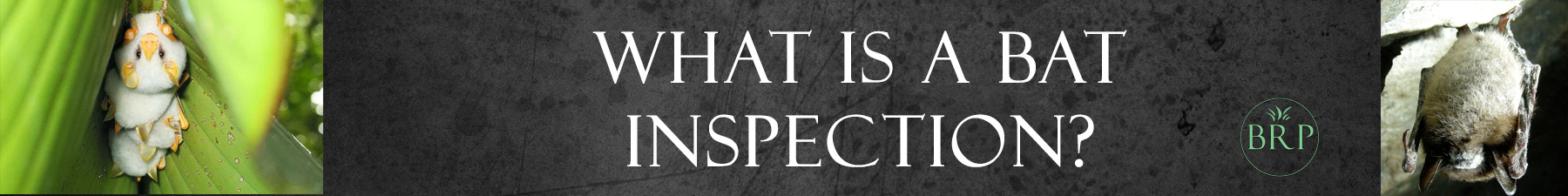 What is a bat inspection header image at bat removal pro