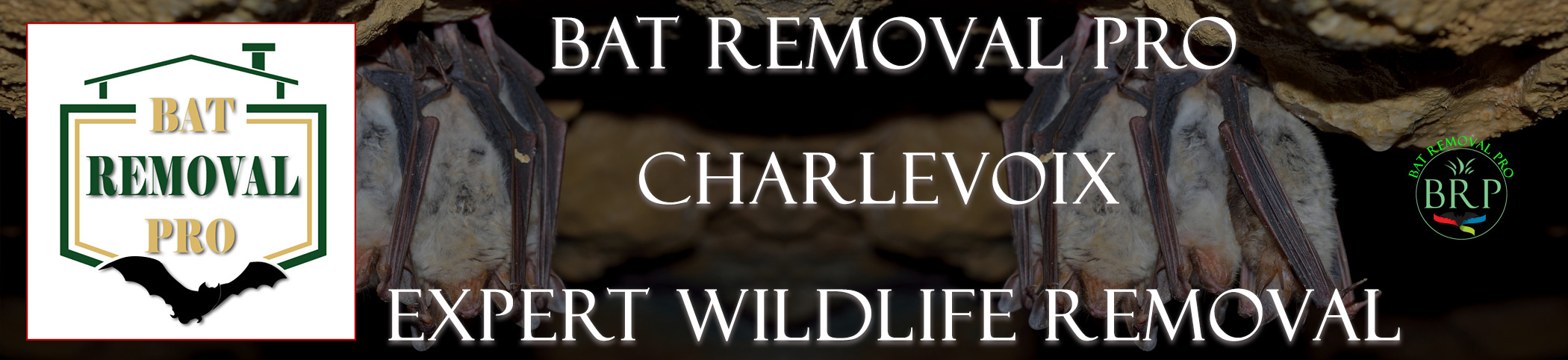 CHARLEVOIX-bat-removal-at-bat-removal-pro-header-image