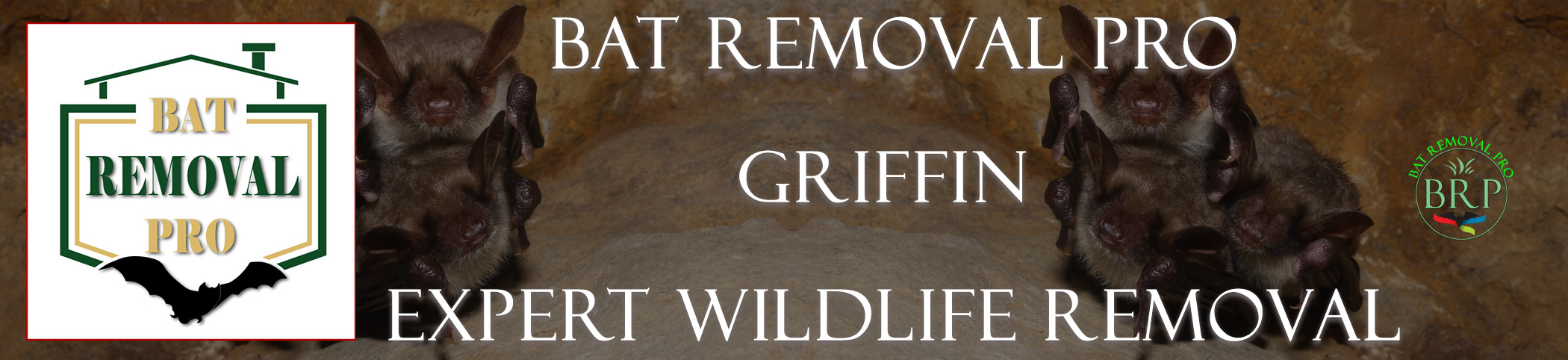 Griffin-bat-removal-at-bat-removal-pro-header-image