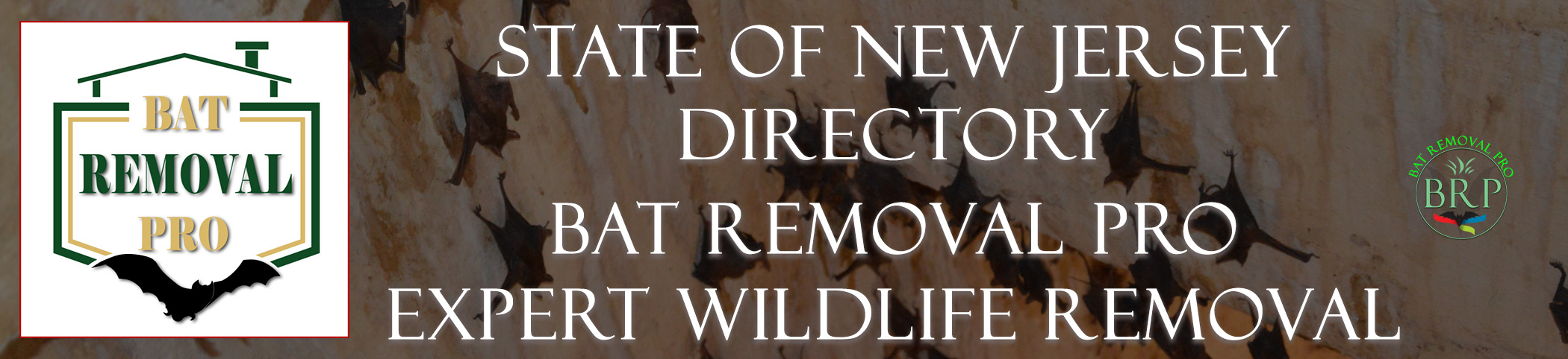 NEW-JERSEY-bat-removal-at-bat-removal-pro-header-image