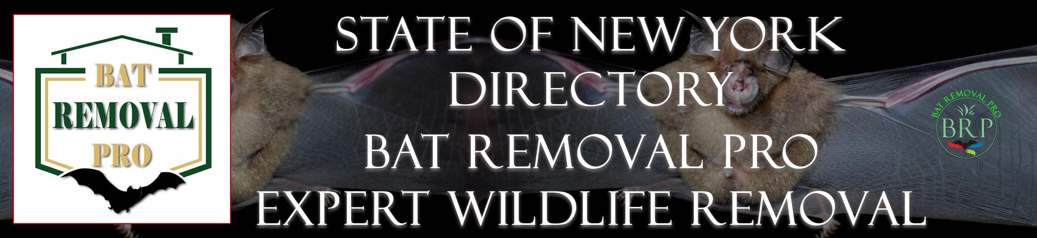 NEW-YORK-bat-removal-at-bat-removal-pro-header-image