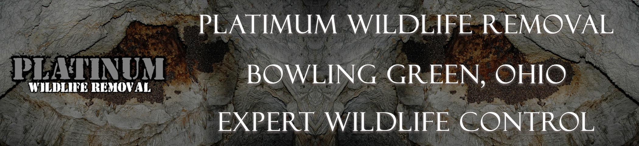 Platinum-Wildlife-Removal_bowling-green-ohio