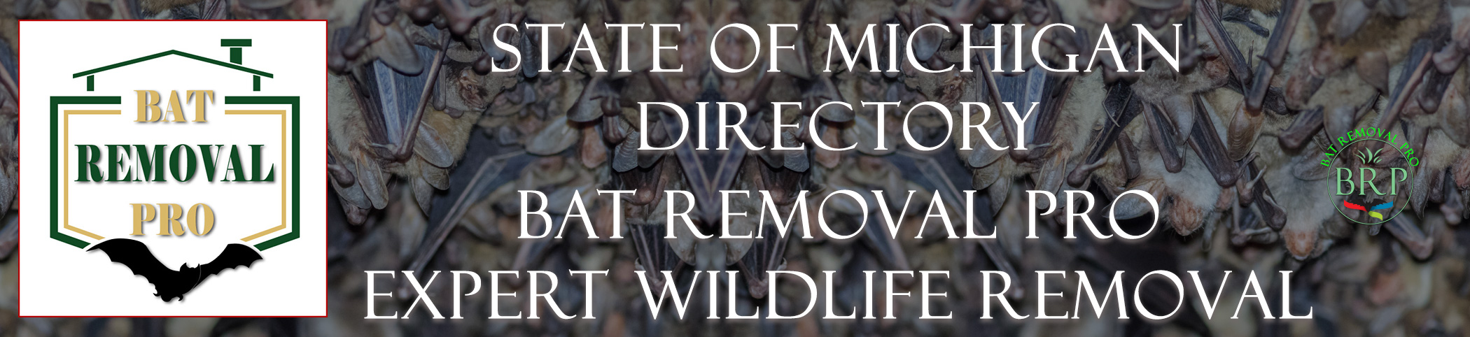 MICHIGAN-bat-removal-at-bat-removal-pro-header-image